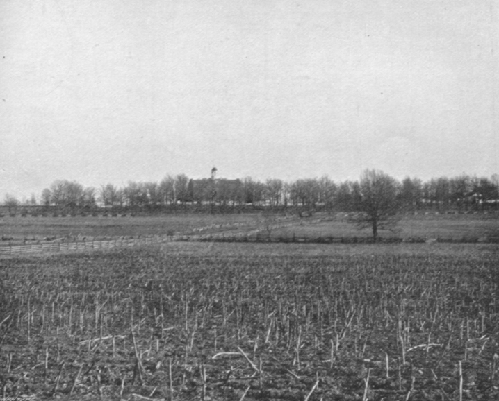 Black and white photograph of Seminary Ridge, showing a flat field, with stalks of plants and a row of trees in the distance.