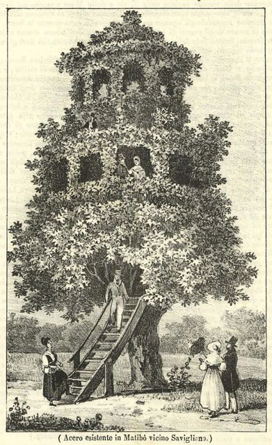 Black and white engraving, unsigned, of large tree shaped into a tree house or arbre-belveder, with two stories.  Two people are on the first story at one window.  There is a stairway, wooden, from the ground to the start of the leaves.  Several people, male and female are on the ground in the fashions of the period, 1837.